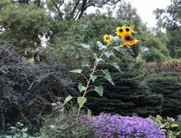 24 Der Garten der Freundschaftsinsel am 3. Oktober 2020