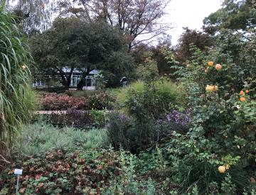 17 Der Ausstellungspavillon des BKV, eingebettet in den Garten