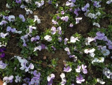 2 Gartenimpressionen