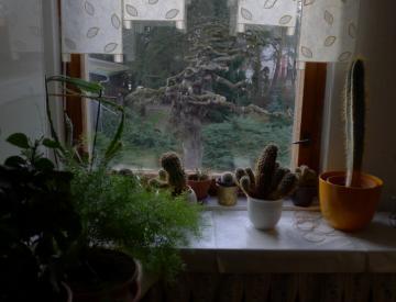 24 Blick auf die Ulme in Forst, Lausitz
