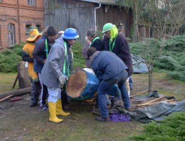 14 Ausgrabung des Baums für Bowling Ball Beach II